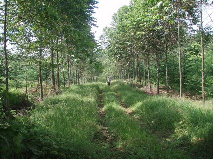 Superior Nut Company Carbon-Offset Forest No. 5; Photo taken May 2009