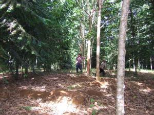RTT Forest in Costa Rica