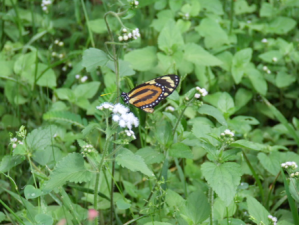 Wildlife in a Costa Rican carbon-offset forest managed by RTT