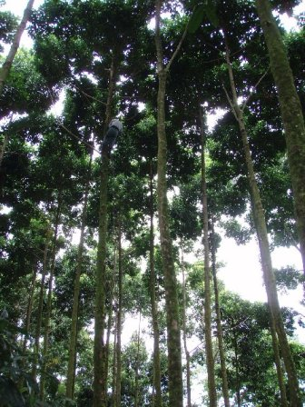 RTT Staff Measuring Trees in Costa Rica