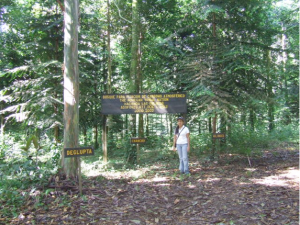 A carbon-offset forest sponsored by the Mohegan Tribal Nation of Connecticut and managed by RTT.  The photo was taken in September, 2007, at which time the forest was 5 years, 2 months old.