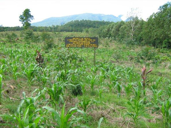 Triumvirate carbon-offset forest