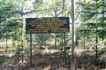 RTT enhances transparency by individualizing projects for each forest sponsor.