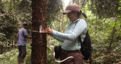 Measuring carbon in trees